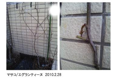 masako_eglantyne.jpg